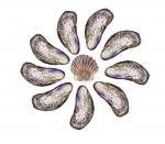 Circle of shells